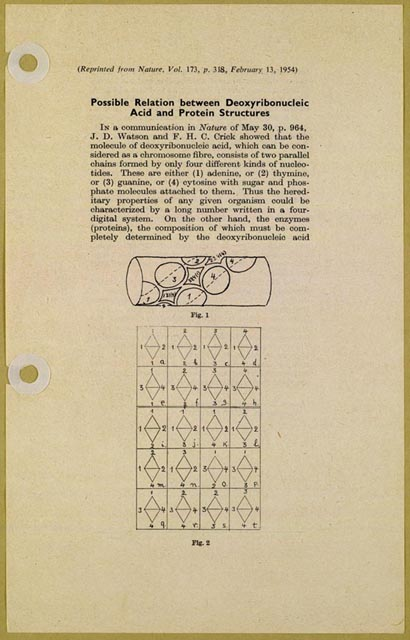 "George Gamow,  ""Possible Mathematical Relation Between Deoxyribonucleic Acid and Proteins,"" Det Kongelige Danske Videnskabernes Selskab, 1954. http://www.loc.gov/exhibits/treasures/trr115.html"