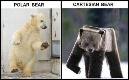 funny-polar-cartesian-square-bear