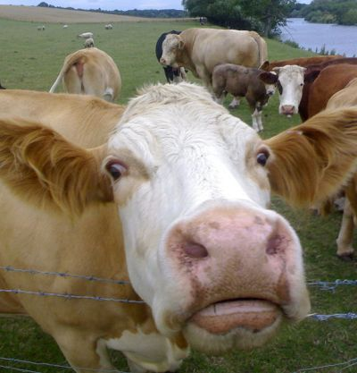 vacaig