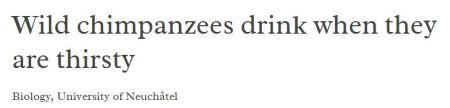 Chimpancés salvajes beben cuando tienen sed.