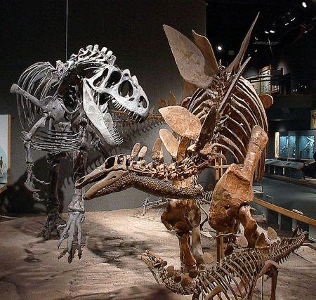 Estegosaurio y alosaurio, Denver Museum of Science and Nature