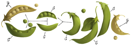 Gregor Mendel's 189th Birthday http://www.google.com/doodles/gregor-mendels-189th-birthday