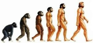 www.afanporsaber.es/2014/03/para-entender-la-paleoantropologia-2a-parte-la-evolucion/