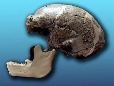 Réplica del cráneo de Homo erectus pekinensis (Sinathropus pekinensis) descubierto en 1929, en la cueva de Zhoukoudian (hoy desaparecido)