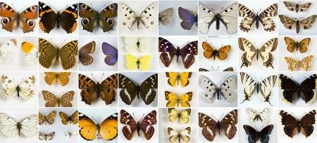 Vladimir Nabokov's butterflies http://www.nabokovmuseum.org/butterfly1.html