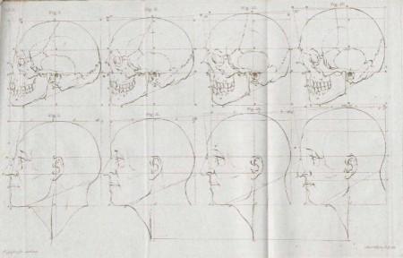 Niño, adulto y anciano Cabezas con ángulos faciales de 80, 90 y 100 grados http://en.wikipedia.org/wiki/Facial_Angles_%28Camper%29