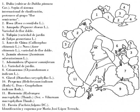 Descripción de las plantas que aparecen en la imagen en la portada del libro de referencia [2]