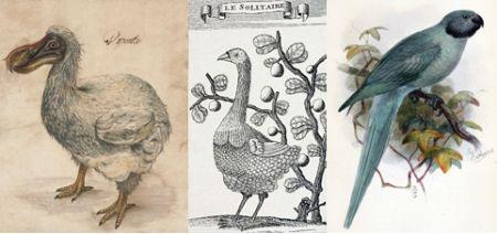 Dodo, Solitario de Rodrigues y cotorra de Newton