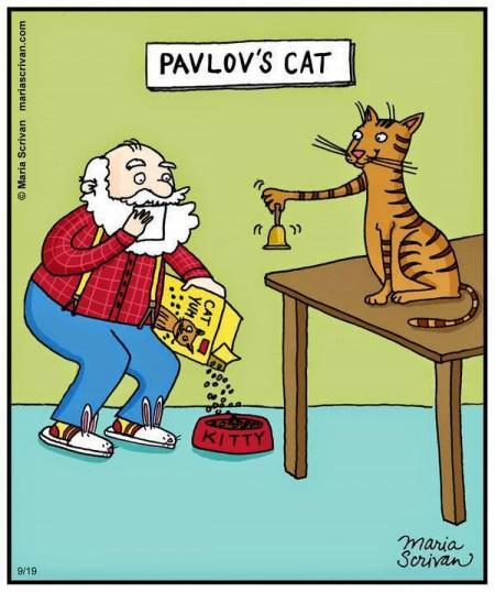 pavlov cat