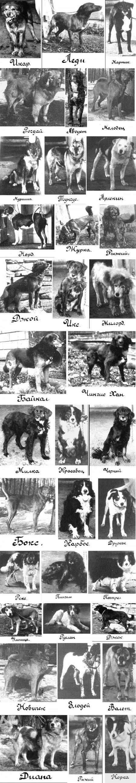 Pavlovs-Dogs