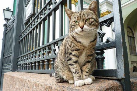 des chats gardent le musée de l'Ermitage à Saint Petersbourg.