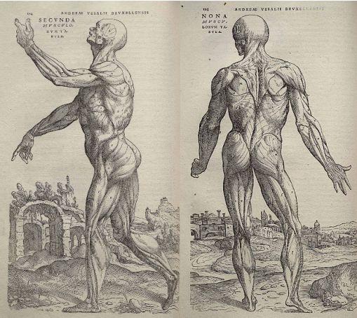 Andreas Vesalius (1514-1564) |