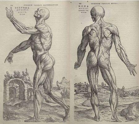 Imágenes en De humani corporis fabrica