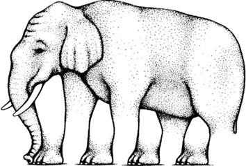roger-shepard-elefant
