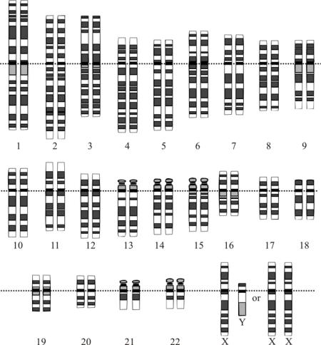 640px-Karyotype