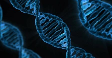 ADN humano