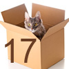 Pretty cat in cardboard box on white background