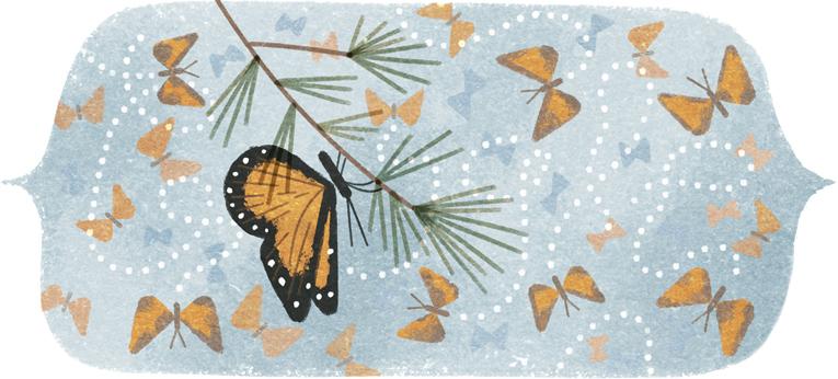 9/1/1975: se descubre el lugar de hibernación de las mariposas monarca |