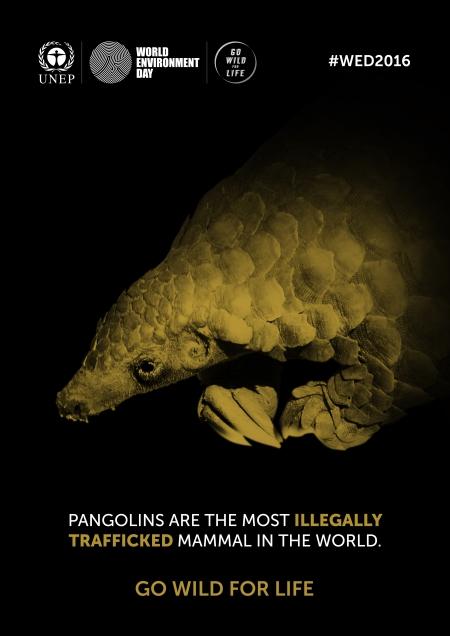 Pangolín.