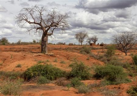 Árbol baobab en un paisaje degradado y árido en la provincia Oriental de Kenya. Foto: Flore de Preneuf / Banco Mundial.