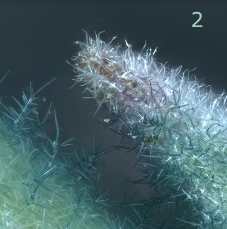 Día 1: A winter forest made up of plant hair. © MPG