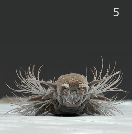 Día 5: Bristly little creatures. © MPG