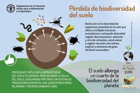 Pérdida de biodiversidad.
