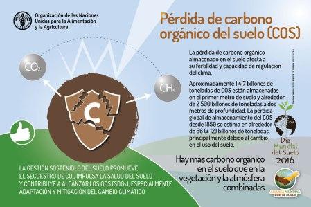 Pérdida de carbono orgánico.