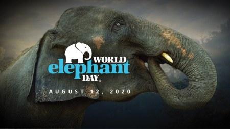 Día Mundial del Elefante 2020 |